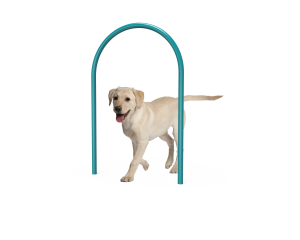 Dog Large Loop (LTDP02)